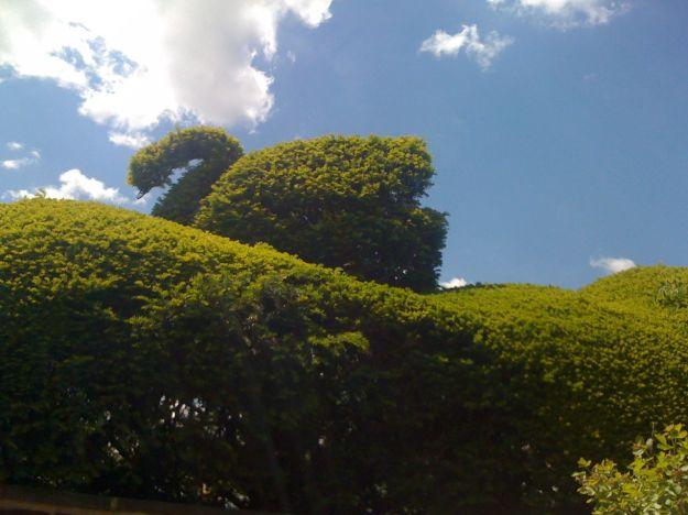Topiary Swan