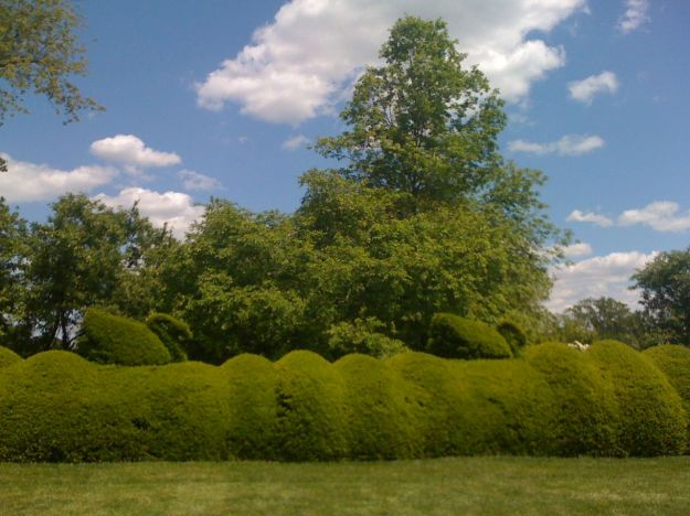 Topiary Swans and Waves