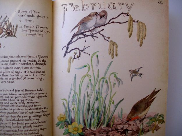 February Illustrated