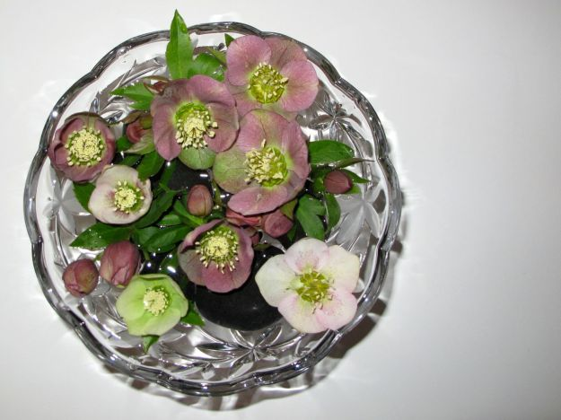 Floating Helleborus x hybridus (Lenten rose) In A Glass Dish