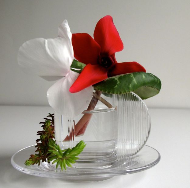 In A Vase On Monday - Cyclamen