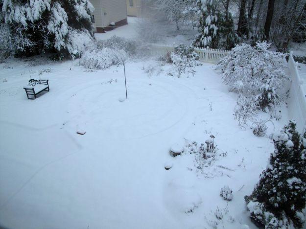 Snow Dressed Garden