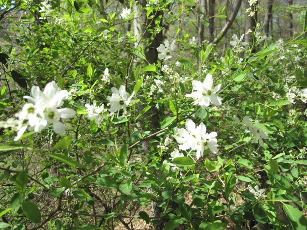 Bluff Garden and Cross Creek Overlook-2