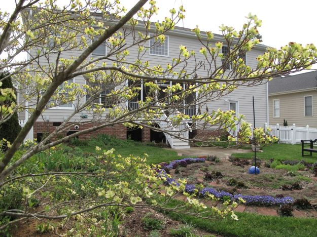 Looking east toward the back of the house. Cornus florida (Flowering Dogwood).