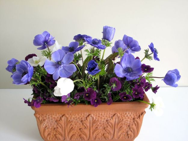 In A Vase On Monday - Anemones Redux