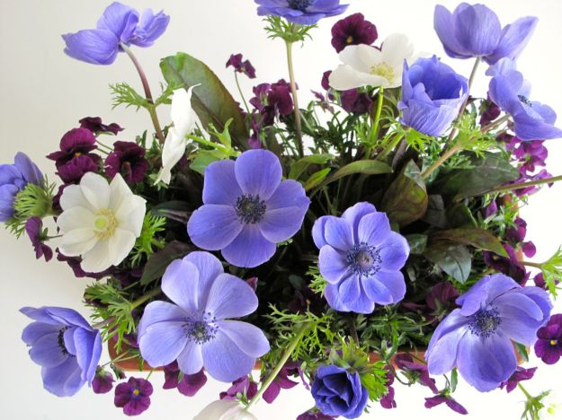 Anemones In A Vase On Monday - Overhead View