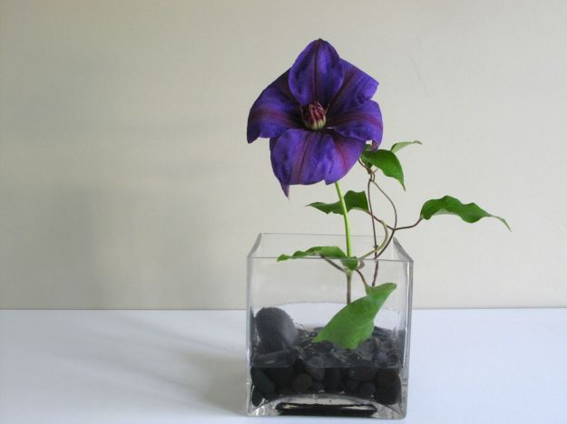 In A Vase On Monday - Clematis