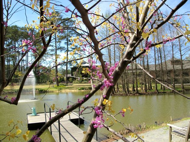 Redbud in bloom at Cypress pond