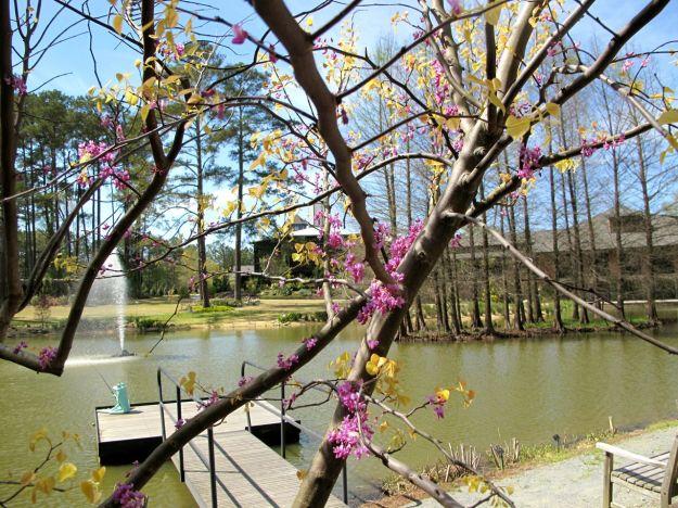 Redbud in bloom at Cypress pond