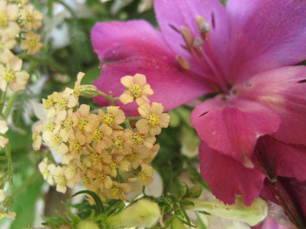 Achillea x 'Appleblossom' (Yarrow) and Alstroemeria x 'Tesmach' (Inticancha® Machu Peruvian Lily)