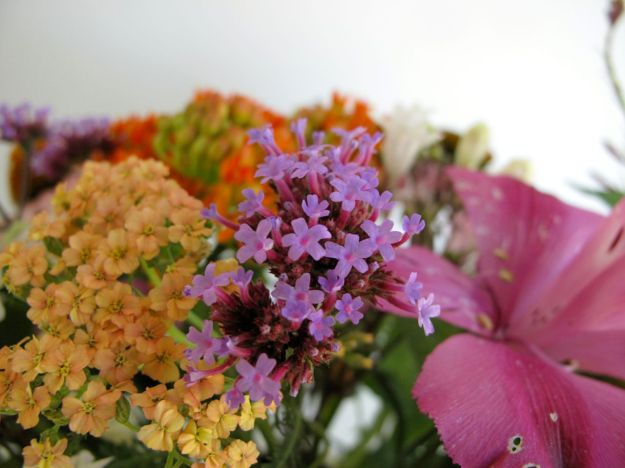 Achillea x 'Appleblossom' (Yarrow), Verbena bonariensis (Tall Verbena) and Alstroemeria x 'Tesmach' (Inticancha® Machu Peruvian Lily)