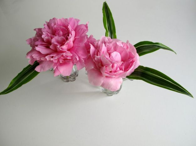 In A Vase On Monday - Paeonia 'Pink Parfait' (Pink Parfait Peony)
