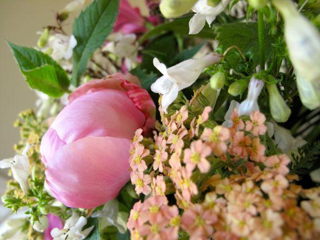 Paeonia 'Pink Parfait' (Pink Parfait Peony)