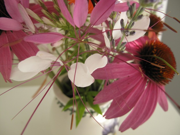 Cleome and Echinacea