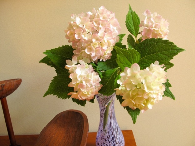 In A Vase On Monday-Hydrangea macrophylla