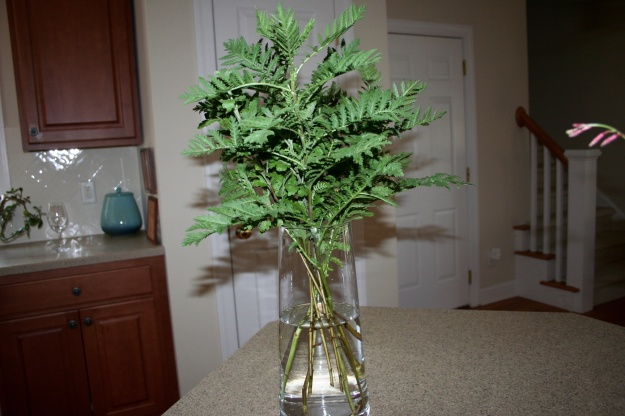 Tanacetum vulgare (Tansy) and Chrysanthemum foliage in new vase