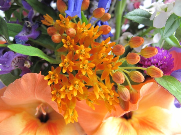 Asclepias tuberosa (Butterfly weed), Gladiolus