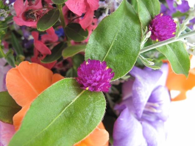 Gomphrena, Angelonia 'Raspberry', Gladiolus