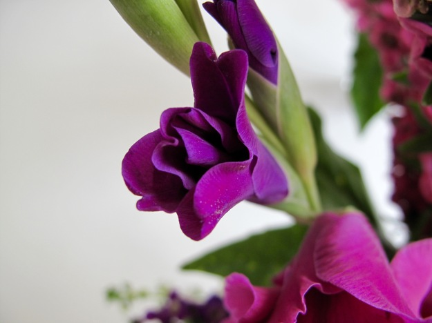 Purple Gladiolus from Blue Shades Collection