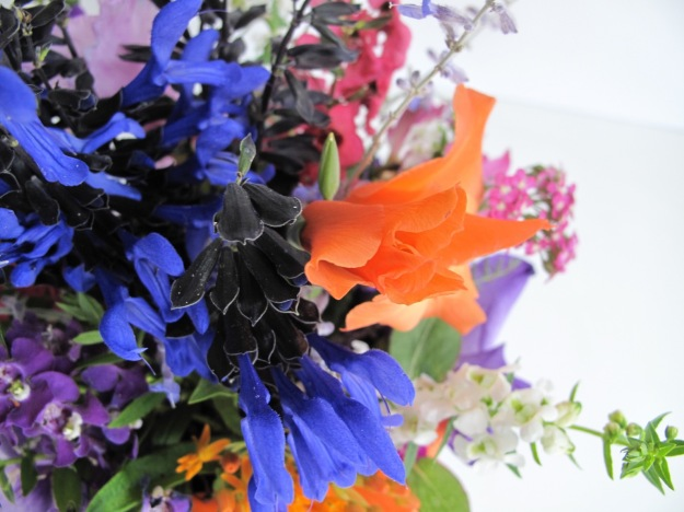 Salvia guaranitica 'Black and Blue' and Gladiolus