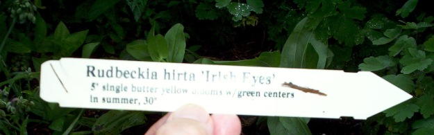 Plant tag for Rudbeckia hirta 'Irish Eyes' 7-15-2006