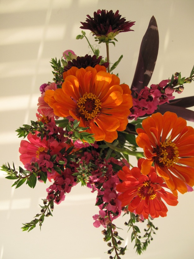 From above: Zinnia, Angelonia, Dahlia and Purple heart