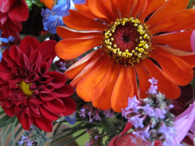 Dahlia and Zinnia - In A Vase On Monday
