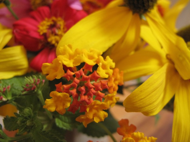 Lantana Echoes Colors of Zinnia and Rudbeckia
