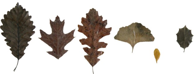 Leaves - Row 2