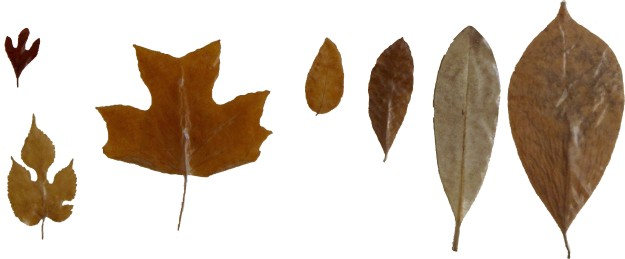 Leaves - Row 3