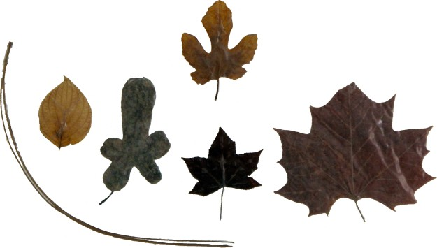 Leaves - Row 4