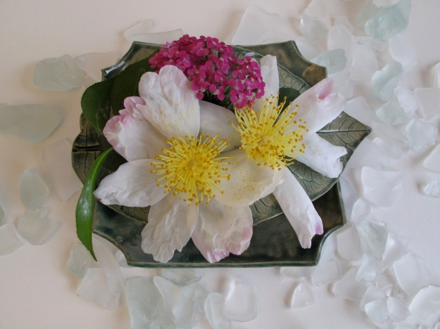 Camellia sasanqua 'Hana-Jiman' and Achillea filipendulina (Fern-leaf Yarrow)