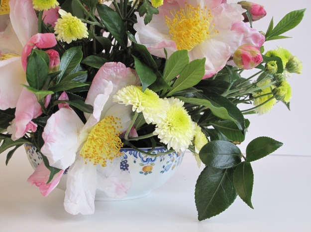 Camellia sasanqua 'Hana-Jiman' and Chrysanthemum