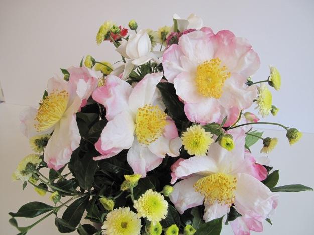 Camellia sasanqua 'Hana-Jiman' and Chrysanthemum