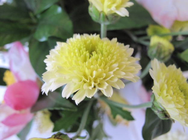 Passalong Chrysanthemum