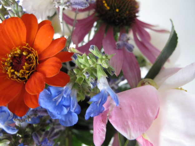 Zinnia, Saliva, Coneflower and Camellia