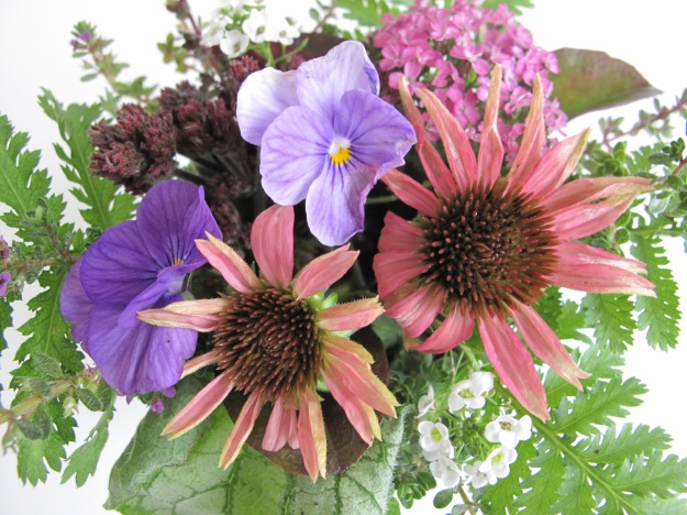 Echinacea, Achillea and Viola