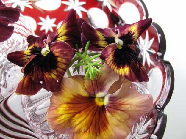 Pansies with a sprig of Angelina sedum