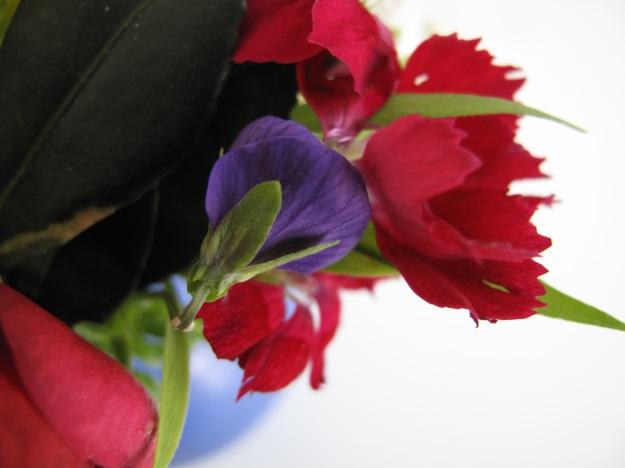 Viola and Dianthus