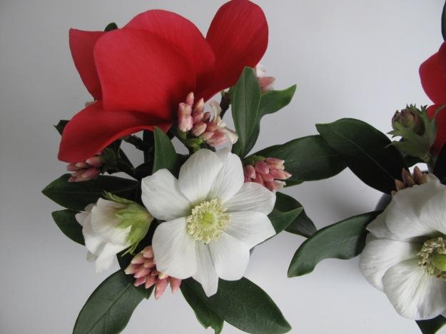 Cyclamen, Daphne, Anemone coronaria 'Bride'