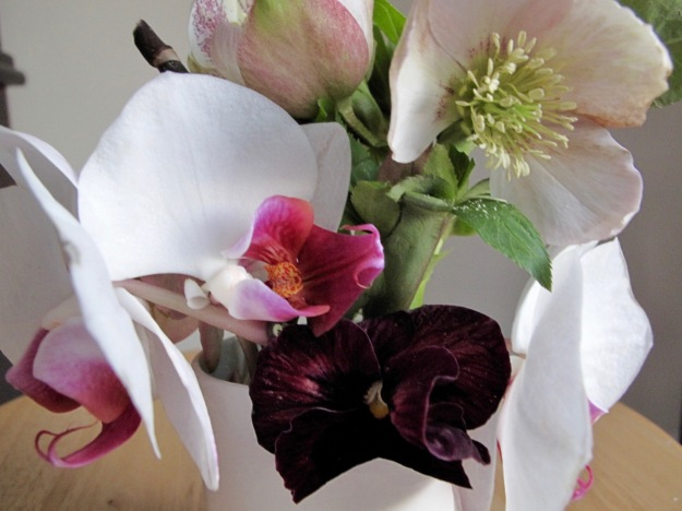 Orchid, Pansy and Hellebore