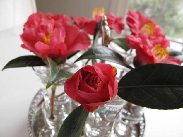 In A Vase On Monday - Camellia x 'Coral Delight'
