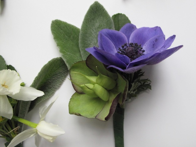 Greenery, Helleborus and Anemone coronaria 'Mr. Fokker'