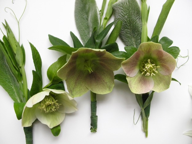 Helleborus with Everlasting sweet pea and Lamb's ear foliage