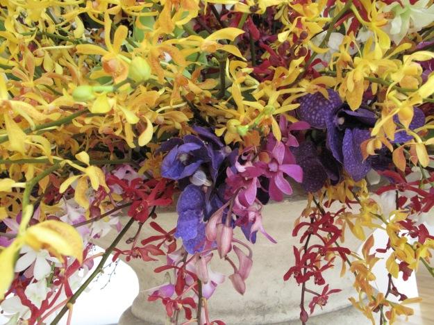 Orchids. Steve Taras
