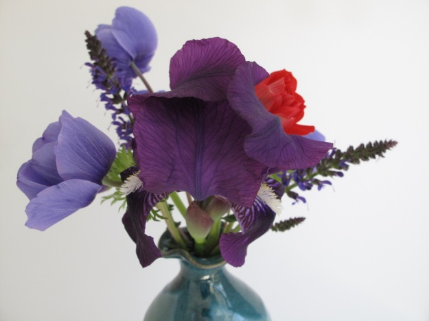 Iris germanica (Bearded iris) and Anemone coronaria