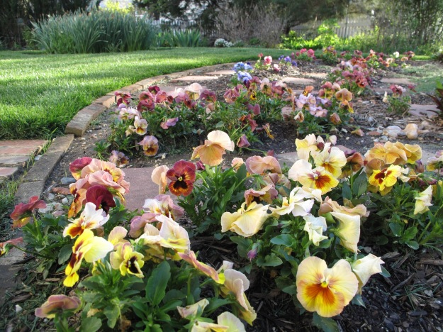 Pansies In Meditation Circle
