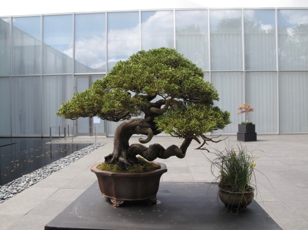 Triangle Bonsai Society