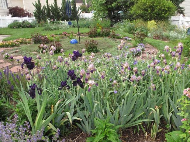 Bearded Iris Guard Meditation Circle