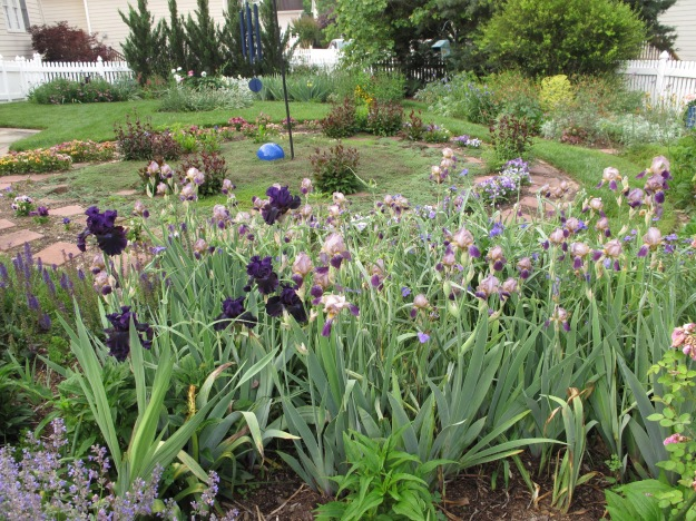 Bearded Iris Guard Meditation Circle